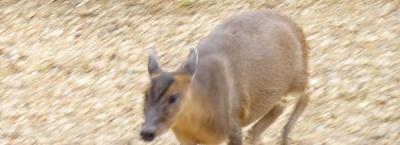Click image for larger version.  Name:deer1.jpg Views:70 Size:97.7 KB ID:4854