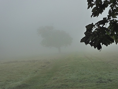 Click image for larger version.  Name:Misty Path.jpg Views:33 Size:94.7 KB ID:14025