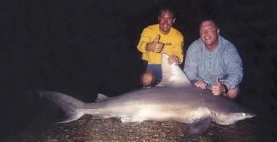 Click image for larger version.  Name:sandbar-shark-texas.jpg Views:138 Size:23.4 KB ID:9131