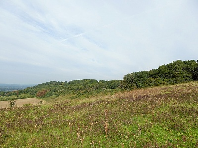 Click image for larger version.  Name:North Downs 2.jpg Views:93 Size:97.4 KB ID:14015