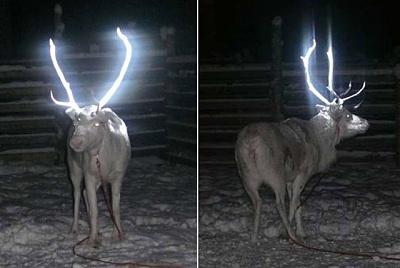 Click image for larger version.  Name:reflective-antler-reindeer.jpg Views:183 Size:45.9 KB ID:11720