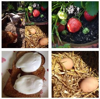 Claires Blog Gardening Growing Chickens Cooking Household